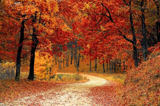 podzimní krajina a barevné listí
