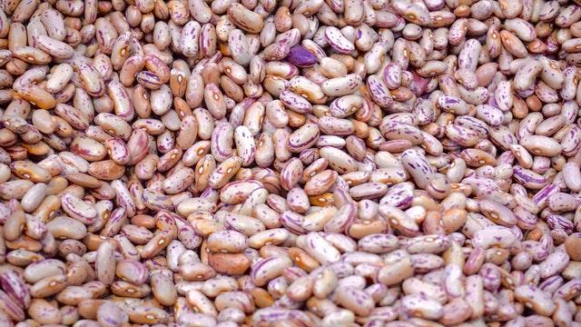 semena, fazole